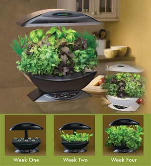 top 25 best hydroponic herb garden ideas on pinterest indoor farming how to grow plants and. Black Bedroom Furniture Sets. Home Design Ideas