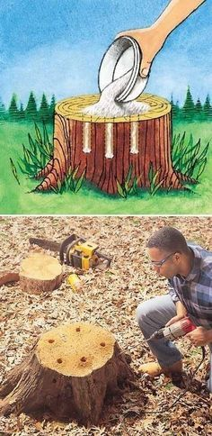 HOW TO REMOVE TREE STUMPS-- without the fuss!  Application- Drill holes in the top of the stump with a one inch spade bit.-start your holes three inches from the perimeter of the stump and keep them three to four inches apart until you run out of room. Bore the holes as deeply as you can. Pour 100 percent Epsom salt into the holes and add enough water to moisten the salt. This moisture will carry the salts into the cells of the tree, drying them out. Dig up roots and douse with salt also.