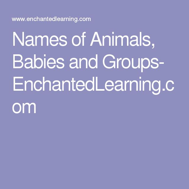 Names of Animals, Babies and Groups- EnchantedLearning.com