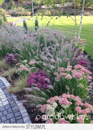 Ornamental grass and flower...low maintenance pink border, lavender, astilbe, chives, pink grasses