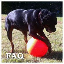 The Varsity Ball -- Large Dog Toys Big Dog Toys Indestructible Dog Toy Tough Dog Toys
