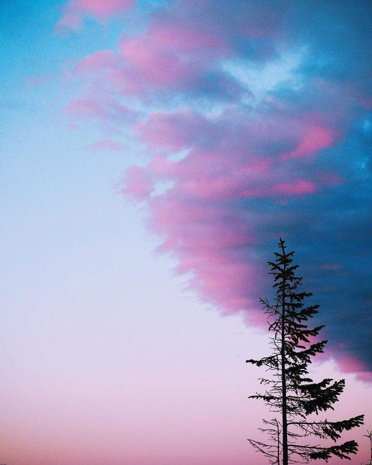 Sandra Linnell captured this gorgeous blue and pink sky with a lone tree during a Printler Walk in Skellefteå, in the northern parts of Sweden. Find more of Sandras photographs at printler.com https://printler.com/sv/fotograf/1431-Sandra-Linnell