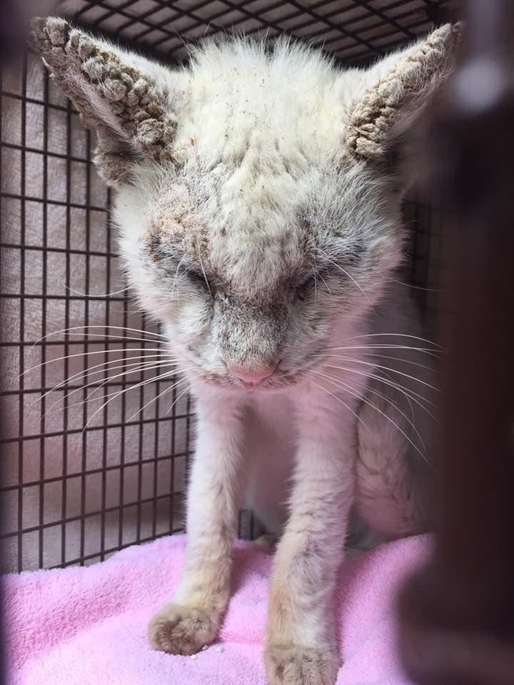 Lorsque ce chat aveugle a ouvert les yeux, ses sauveteurs ont eu une incroyable surprise…