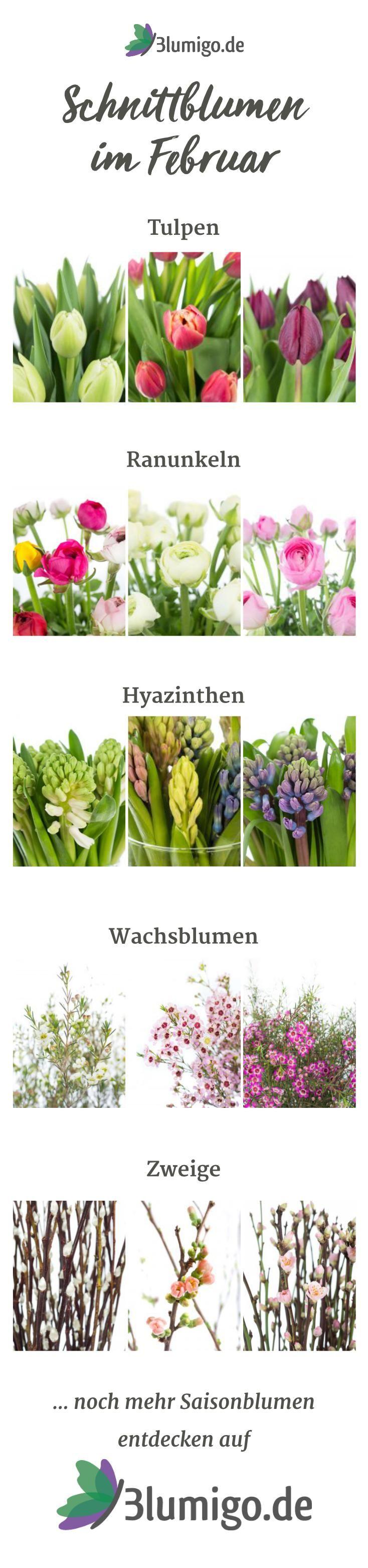 Welche Blumen haben im Februar Saison? Mit der gezielten Auswahl an Saisonblumen kann man sich einiges an Geld für die Blumendeko sparen, da Blumen in ihrer jeweiligen Hauptsaison besonders günstig sind. Wir haben in unserem Saisonkalender die beliebtesten Sorten für den Monat Februar zusammengestellt. #schnittblumen #blumendekoration #floristik #tischdeko #blumenstrauß #brautstrauß #tischdekoration #hochzeitsdekoration #hochzeit #hochzeitsdeko #hochzeitsblumen  #winter #frühling #boho…