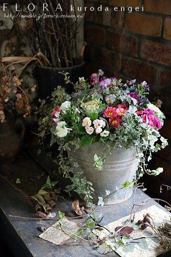 アンティークバケツに寄せ植えを。。。プリムラ・ハボタン・パンジーを使って |フローラのガーデニング・園芸作業日記