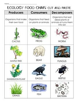 Want a quick little ecology assessment??? Challenge your students to complete this cut and paste to show you what they know. two levels of the cut and paste are included for your different level learners!  Enjoy!  This product is part of the following bundle:  Ecosystem Resources Bundle: lessons, sorts, activities, food chain, task cards  More great stuff on Ecology and Adaptations!