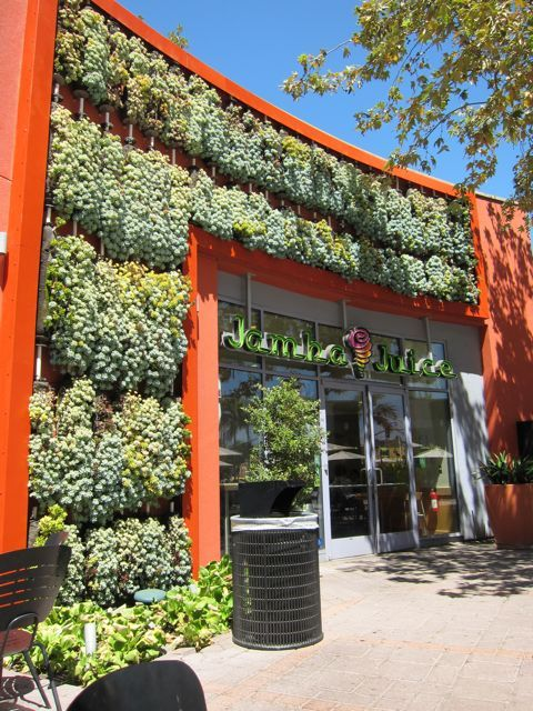 114 best images about SUCCULENTS vertical garden on