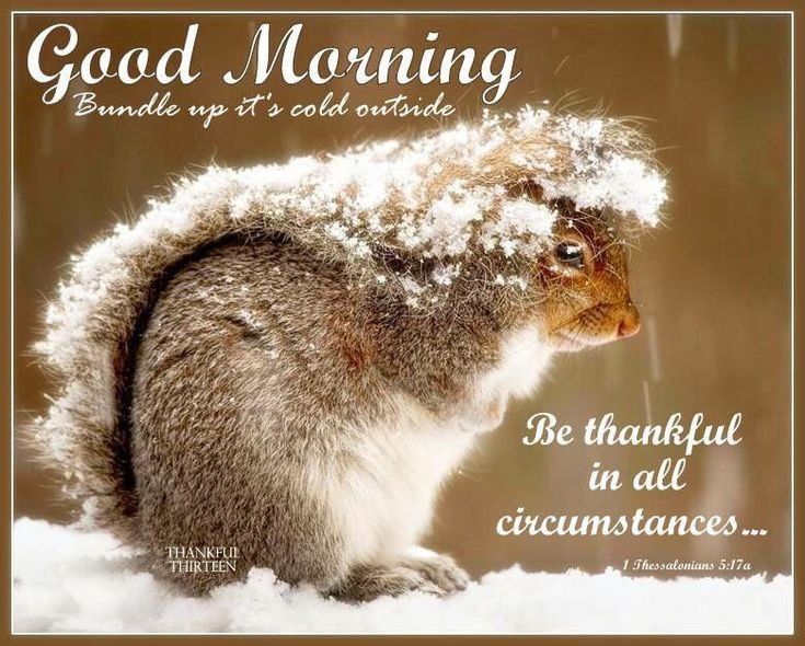 Good Morning Quotes Cute: 445 Best WINTER GREETINGS⛄ Images On Pinterest