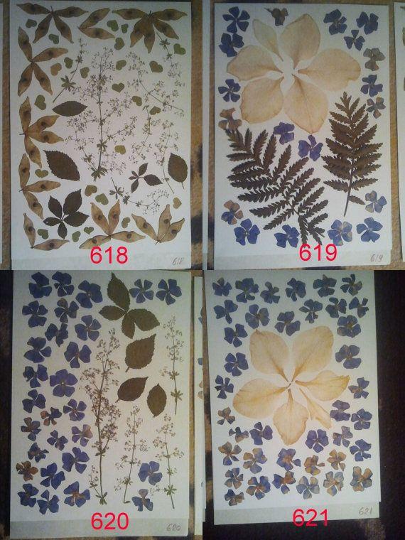 Pressed flowers / pressed flower by PressedFlowersGarden on Etsy