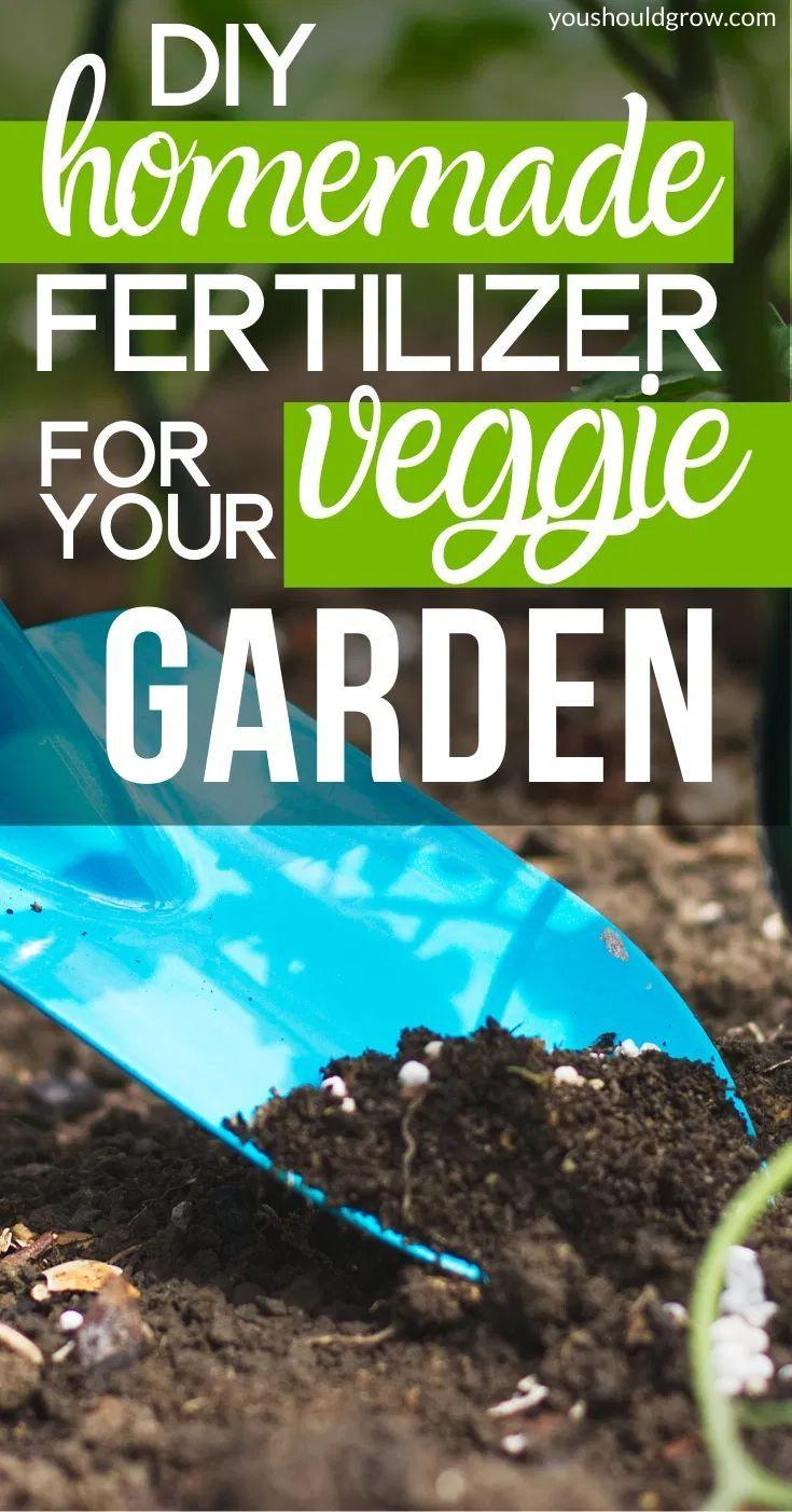 f4881eb66b0827312c0007ef7cbc8419 - Expert Gardener Plant Food How To Use