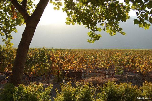 TOUR DEL VINO - VALLE DE COLCHAGUA El Valle de Colchagua es un valle con denominación de Origen, en donde las uvas y los mostos que se producen hacen de este un lugar especial, en el Tour del Vino al Valle de Colchagua usted vivirá la experiencia del vino..
