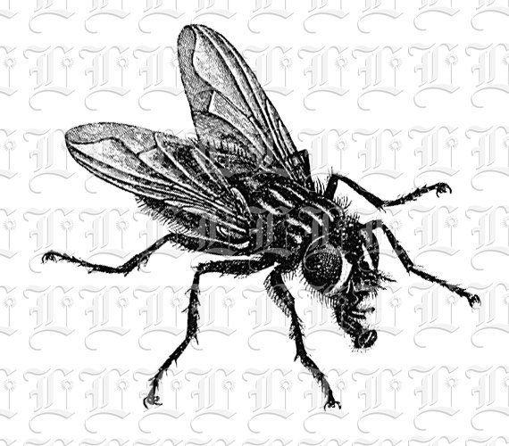 Digital House Fly Image Vintage Fly Graphic Illustration Etsy In 2021 Clip Art Vintage Vintage Images Graphic Illustration