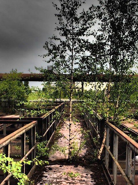 #Trees growing through metal #walkways #Landschaftspark #Germany #industrial