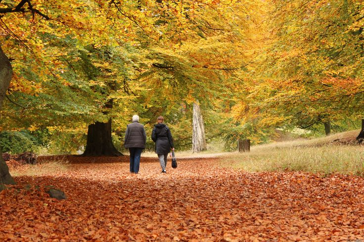 Walk in Dyrehaven, Copenhagen, Denmark that day of autum where colors of nature are at their finest (picture: Christoffer Volf)
