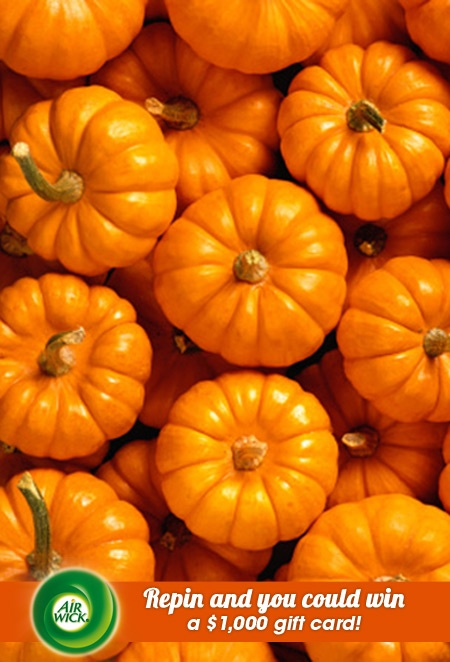 Freshly harvested #fall ingredients from the #pumpkin patch.   Visit link for sweepstakes information: https://www.airwick.us/repin_to_win.phpFall Ingredients, Halloween Recipe, Harvest Fall, Pumpkin Recipe, Autumn Holiday, Fresh Harvest, Pumpkin Patches, Air Wicked, Holiday Thanksgiving