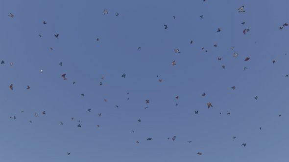 Butterflies and Blue Sky
