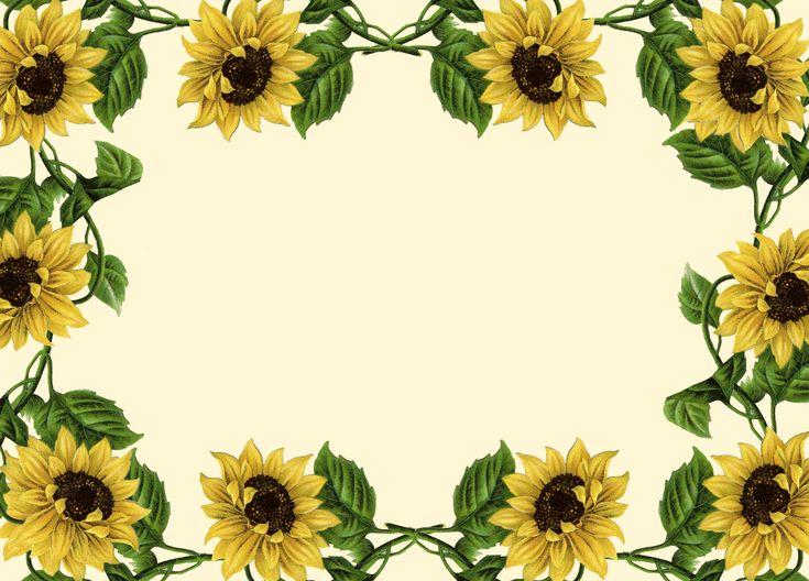 Sunflower Clip Art Borders