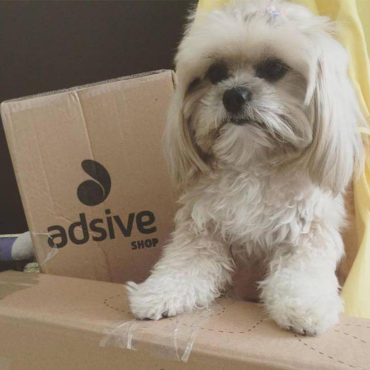 Atenção pet lovers, vem novidade por ai!!! O canal Tips da Penny acabou de receber alguns produtos aqui da AdsiveShop e estão preparando um projeto incrível!