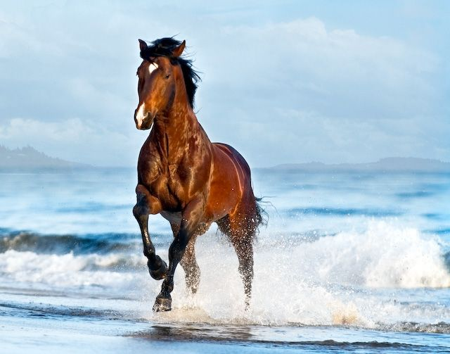 11 best horses on beach images on pinterest at the beach what is it about horses running along the ocean that is so inspiring publicscrutiny Gallery