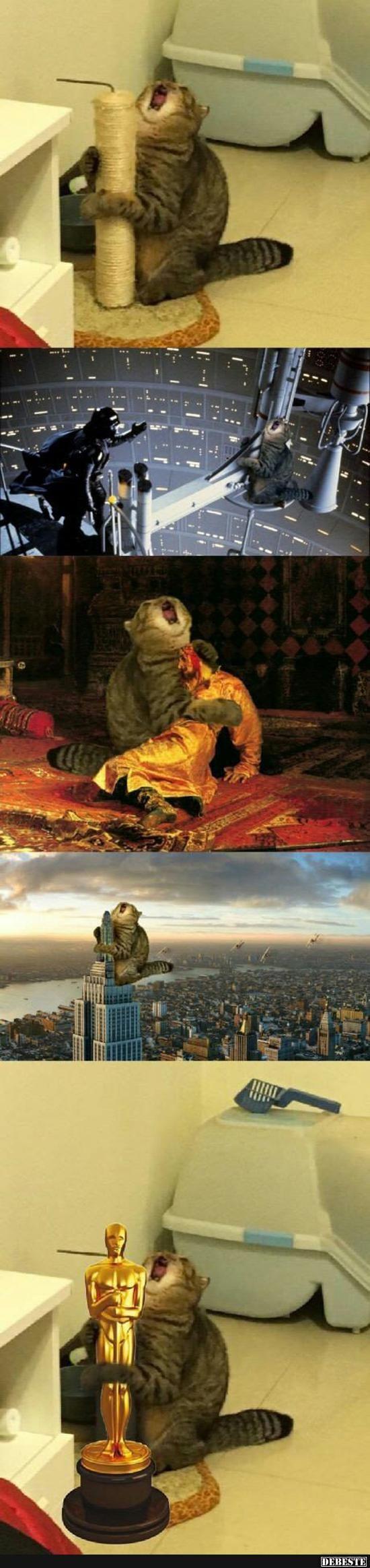 Diese Katze ist so cool xD   – Katzen