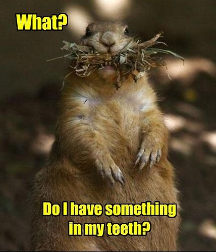 #Funny - squirrel