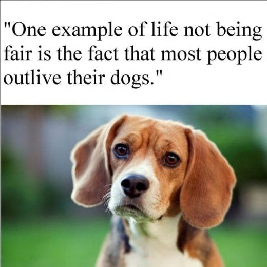 17 Best Images About Pins For Pets On Pinterest: 17 Best Images About Pet Quotes And Messages On Pinterest