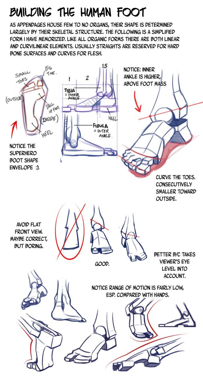 "drawingden: ""Building the Human Foot by NemoNova """