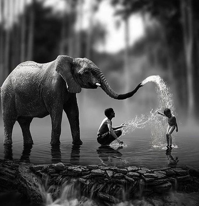 Elephant and children stunning photography