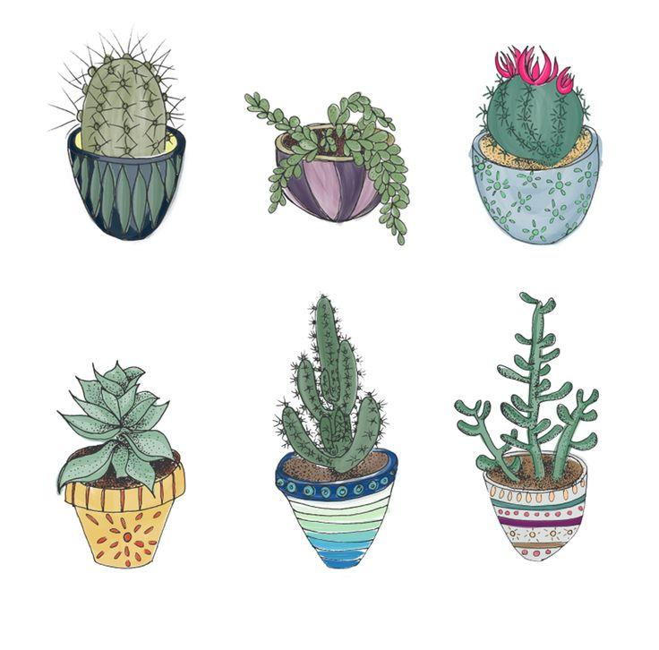 Succulents by Esther Sanchez