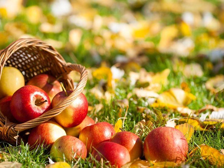 Яблоки на траве.