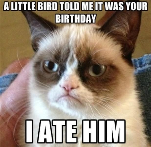 Happy Birthday Funny Pictures Free Download For That Special Day ...