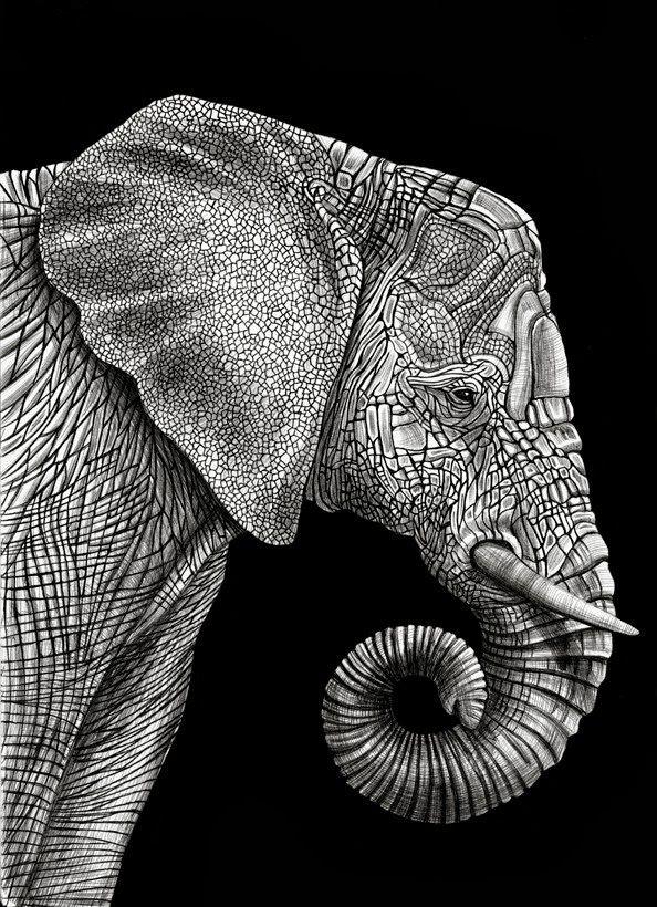 Los hiperrealistas animales de tinta de Tim Jeffs Estos perfeccionistas dibujos han sido realizados por el pintor Tim Jeffs (EEUU).  Sus o...