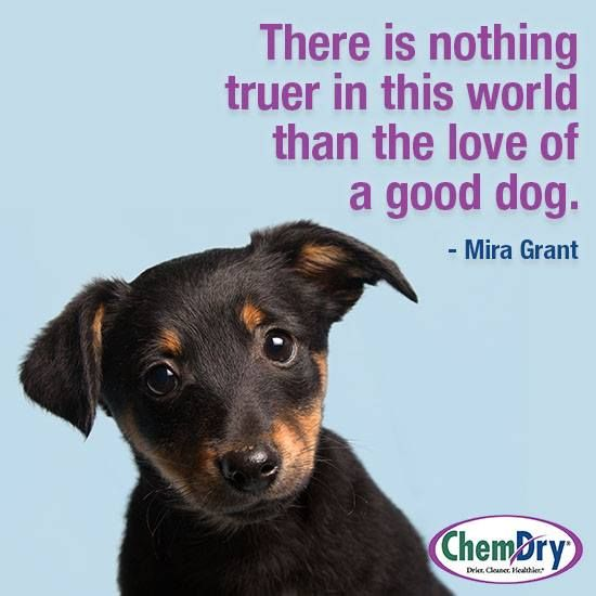 Johnson County ChemDry loves our pets, and we know you love yours too.  That's why it is important to call us when they have an accident on your carpet.  We eliminate the odor and bacteria and the stain.  Our Pet Urine Treatment is the best in the industry.  Call us today! 817-558-3113.