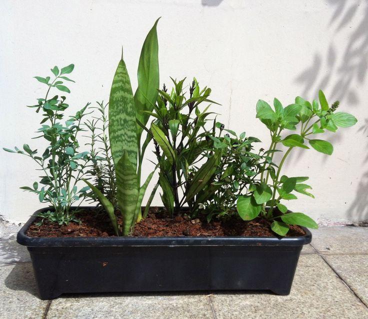 Vaso das 7 Ervas: Plantas e Significado