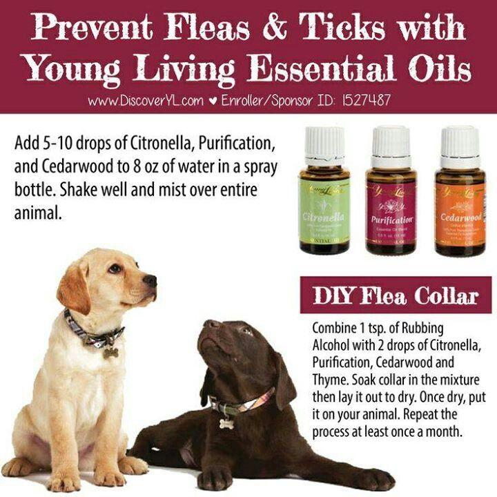 Flea Amp Tick Prevention Young Living Oils Pinterest