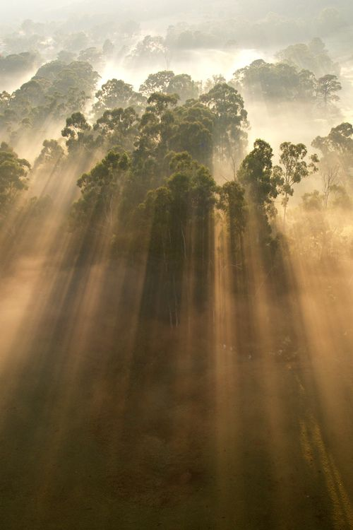 Morning mist (Yarra Valley, Victoria, Australia) | by Steve Lacy