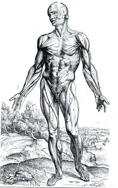 lesarcsplastiquesbd: Anatomie : André Vésale                              …