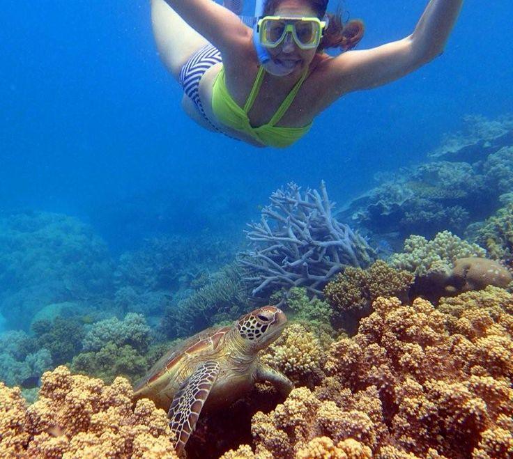 Drift Snorkel - swim with Turtles . Mission Beach -Australia