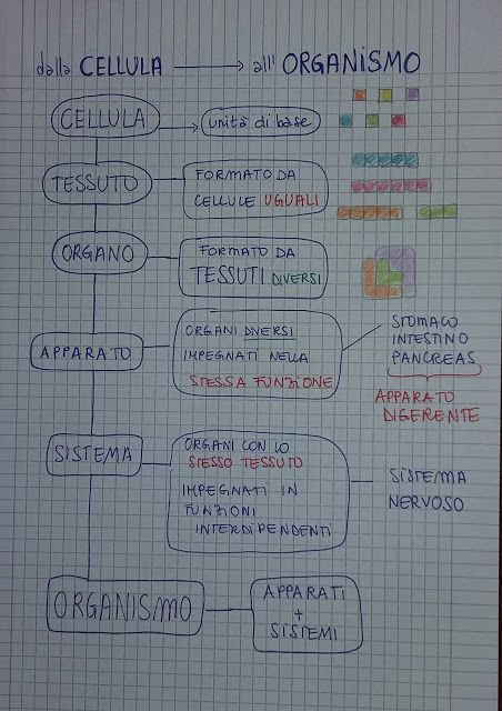 Unconventional Mom: Mind Map : dalla cellula all'organismo (prima medi...