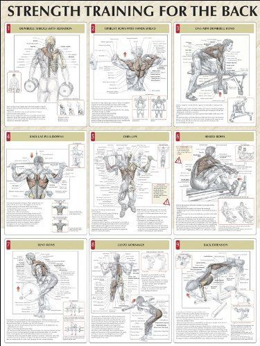 Strength Training Anatomy: Strength Training for the Back Poster by Frederic Delavier. $11.66. Publication: April 13, 2005. Publisher: Human Kinetics; 1 edition (April 13, 2005). Edition - 1