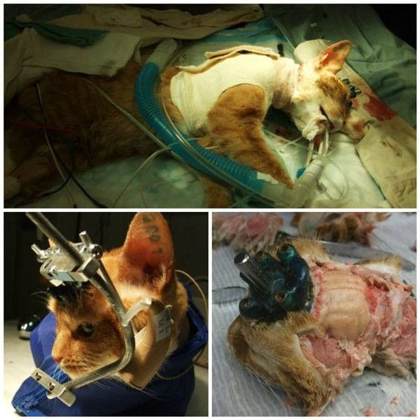 the cruel and inhumane methods of animal testing Transcript of should animals be used for scientific or commercial testing animal testing is cruel and inhumane alternative testing methods now exist that can.