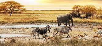 Interesting places to visit in Namibia - Western Etosha National Park - located in northern Namibia, about a 5 hour's drive from Windhoek, the capital of Namibia. This famous game park is dominated by the arid Etosha Pan, yet it is home to nearly 114 mammal species and over 340 bird species.... #wildlife #namibia #photosafari #tourism #extremefrontiers #bush #adventure #holiday #vacation #safari #tourist #travel