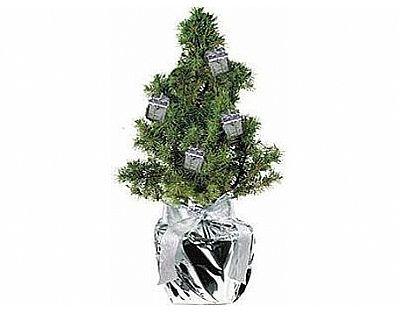 Kleine versierde Kerstboom ! Kerstpakket / Hampert. Relatiegeschenk.nl voor al uw onbedrukte en bedrukten relatiegeschenken.
