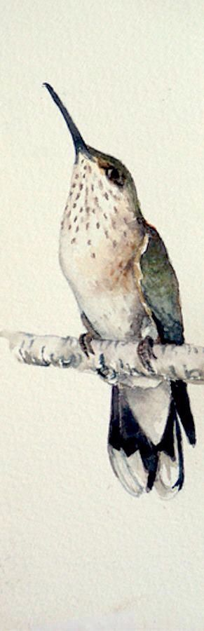 Costa's (hummingbird) female by Ruth Glenn Little, 2013. Watercolour on paper