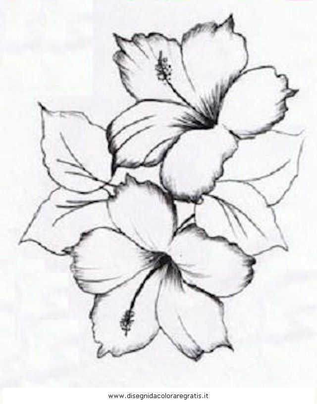 Pin Fiore Di Ibisco Tattoo On Pinterest Pelautscom Picture