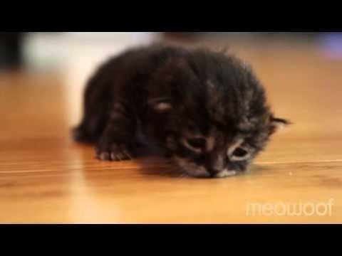 Birdie's first crawl