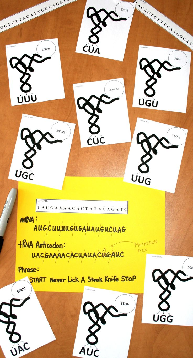 Cool translation activity that connects DNA structure to protein structure.  Could also open up discussions on mutation.