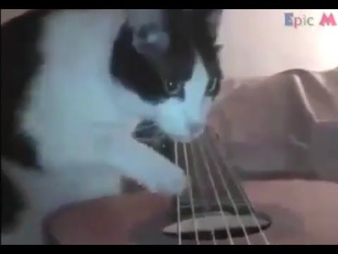 Cat Plays THUG Song To His BRO'S !! https://www.youtube.com/watch?v=4O7bRac1gBw