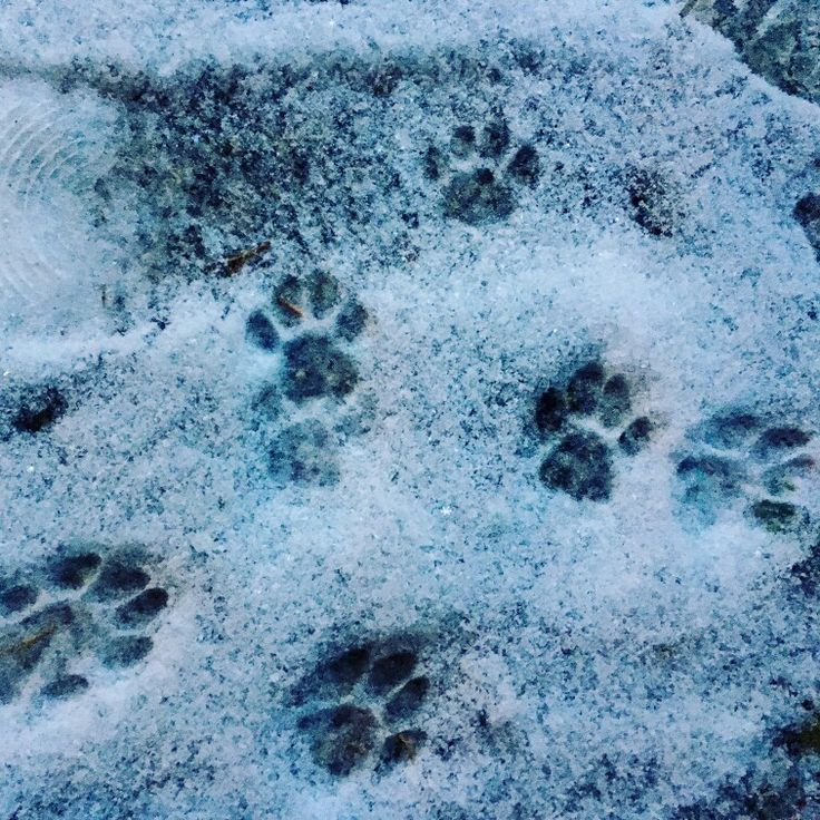 #footprints in the #snow