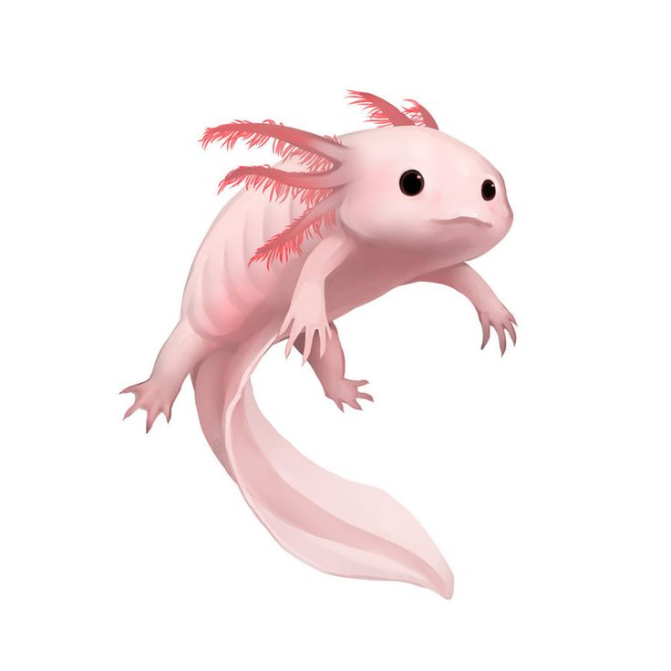 White Axolotl by Silce-Wolf on DeviantArt